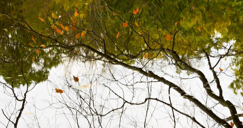 reflections_3_20141019_1371133332.jpg