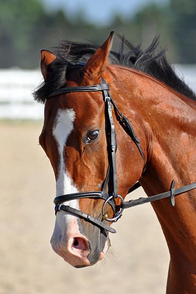 Horses July 2011 205a.jpg