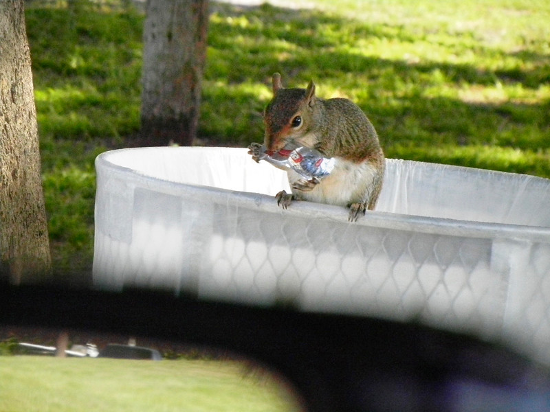 11_9_18 Hungry Squirrel at the Park.jpg