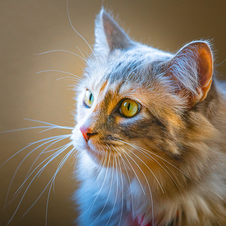New Domestic Animals and Pets