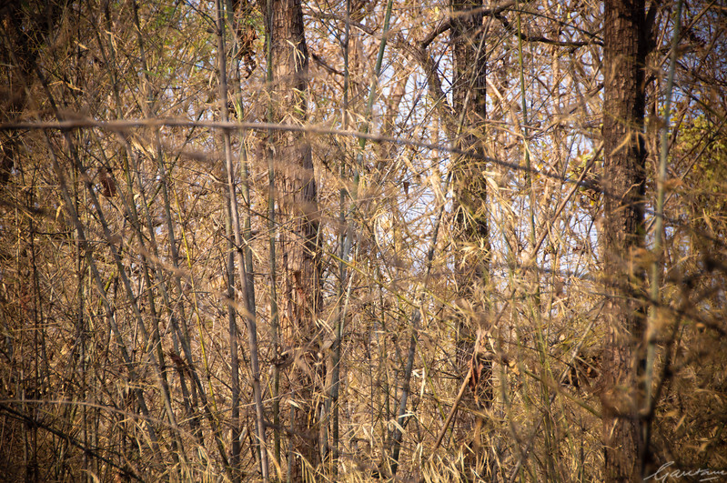 Bamboo forests | Tadoba, April 2012