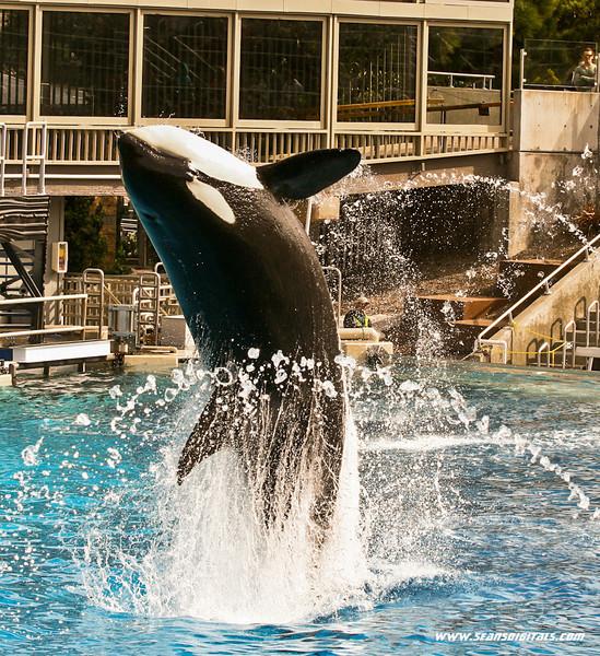 Seaworld-Zoo-18.jpg