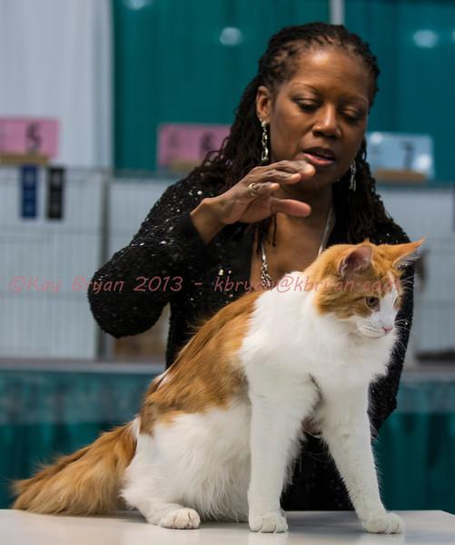 CatShow2014054_1.jpg
