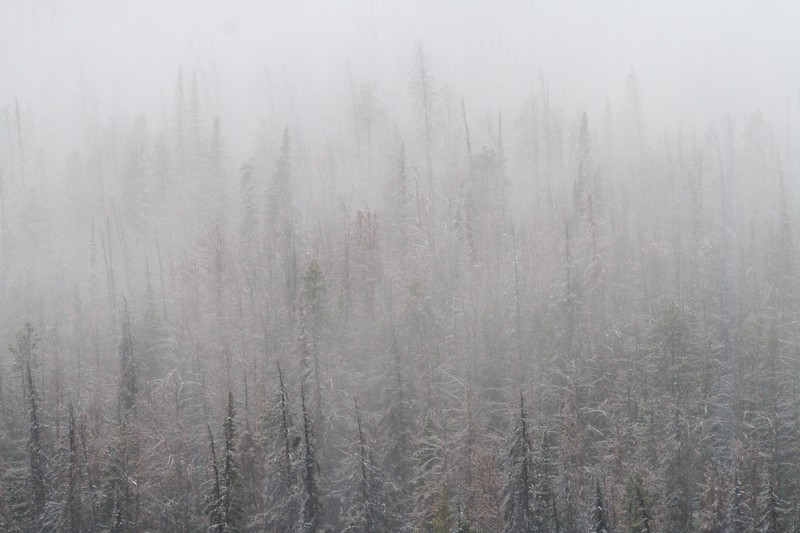 Snow in September is not unexpected [September; Yellowstone National Park, Wyoming]