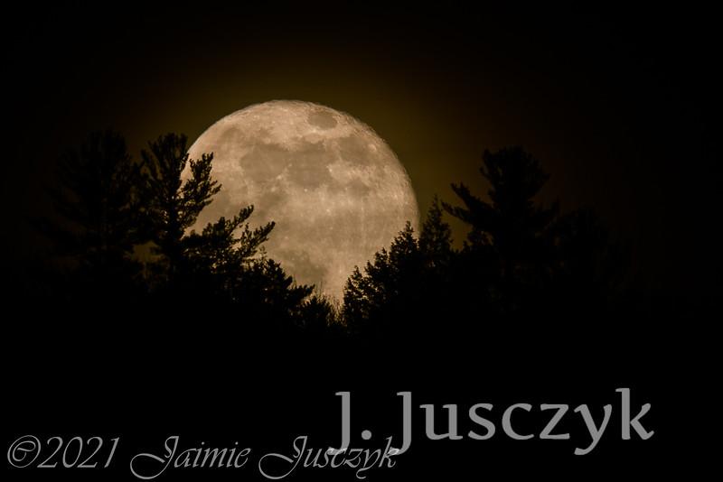 Jusczyk2021-7984-2.jpg