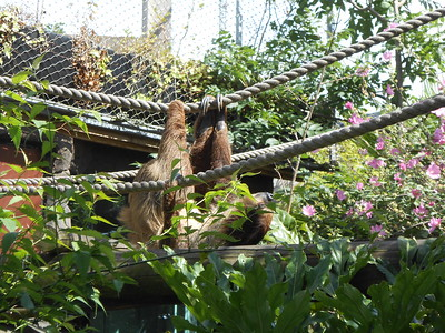 Colchester Zoo - August 2016