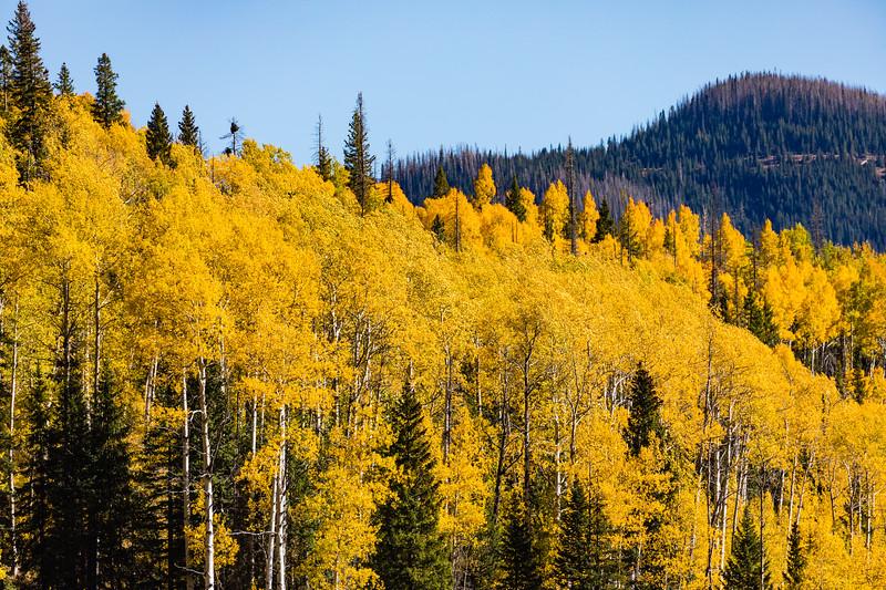 Colorado19_5D4-1557.jpg