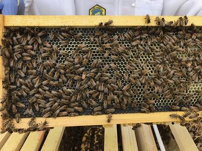 Hive Split April 16-18 2017