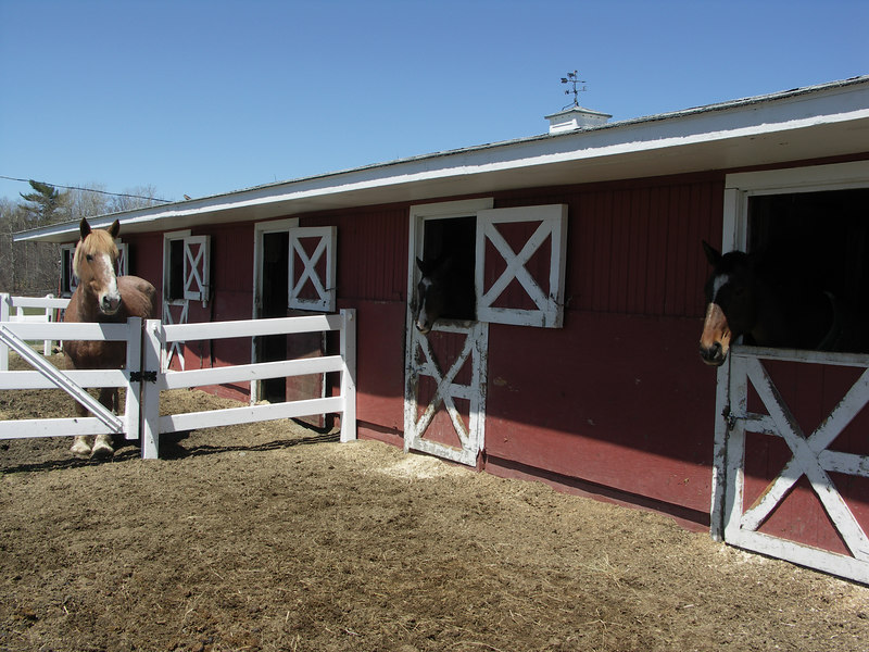 One of the stables with very happy residents.