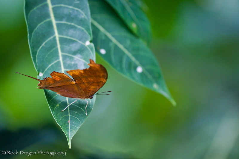 A Butterfly at Xcaret Eco-Park in Mexico.
