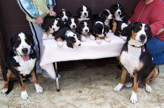 Halie, Moose & pups, 2-20-05, 03, C.JPG