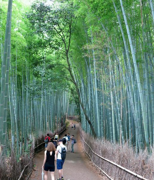 1964 Bamboo forest.jpg