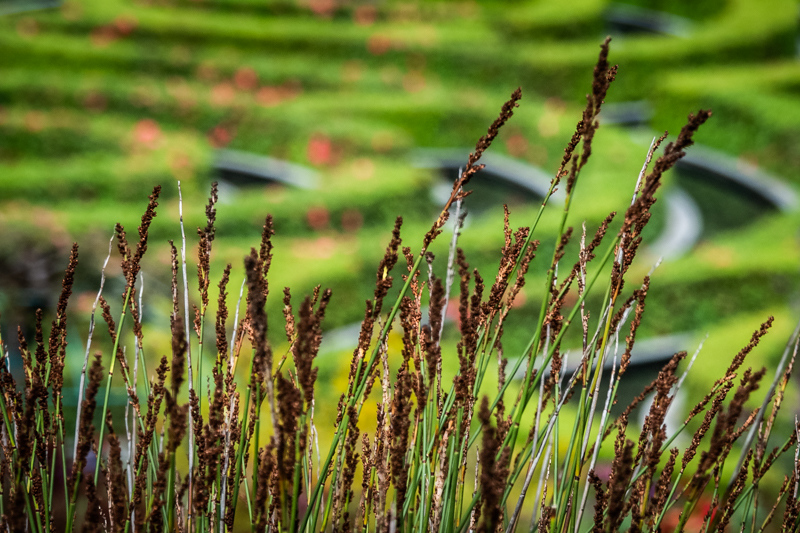 May 9 - Reeds next to a garden on a foggy morning in Los Angeles.jpg