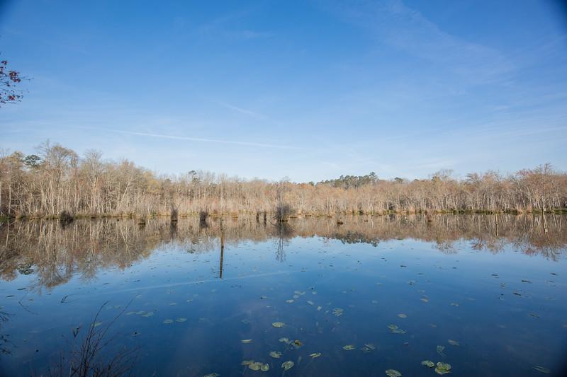 Apalachee River Timberlands_-5.jpg