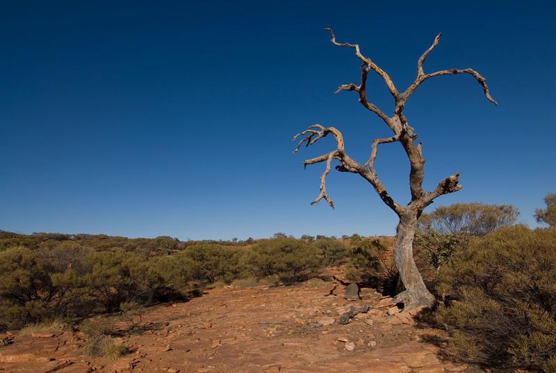 Dead Tree 2, Kings Canyon - Northern Territory, Australia