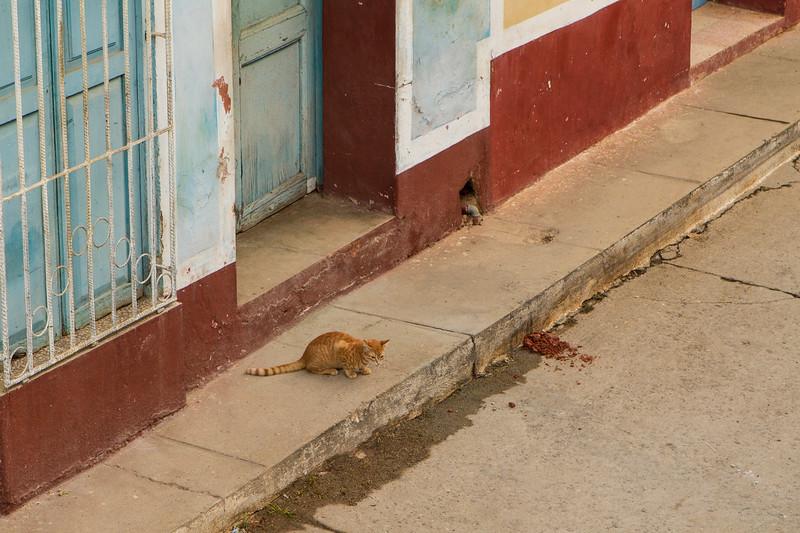 kiel-cats-09.jpg