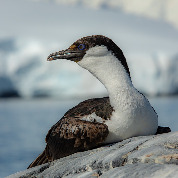 2019_01_Antarktis_06041.jpg