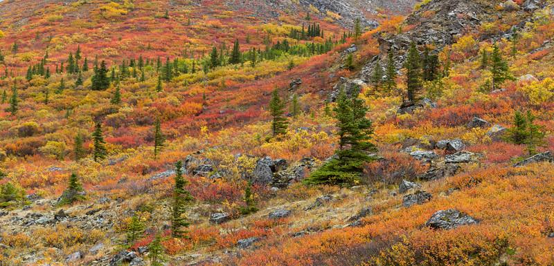 Autumn tundra, Denali National Park