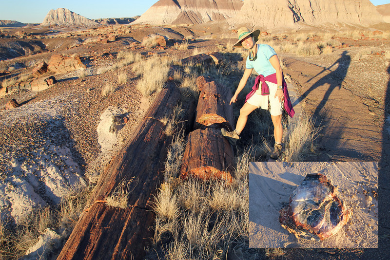 Petrified Forest National Park - The park was created to protect the area from large-scale removal of fossils that was going on. Theft of petrified wood still remains a problem.