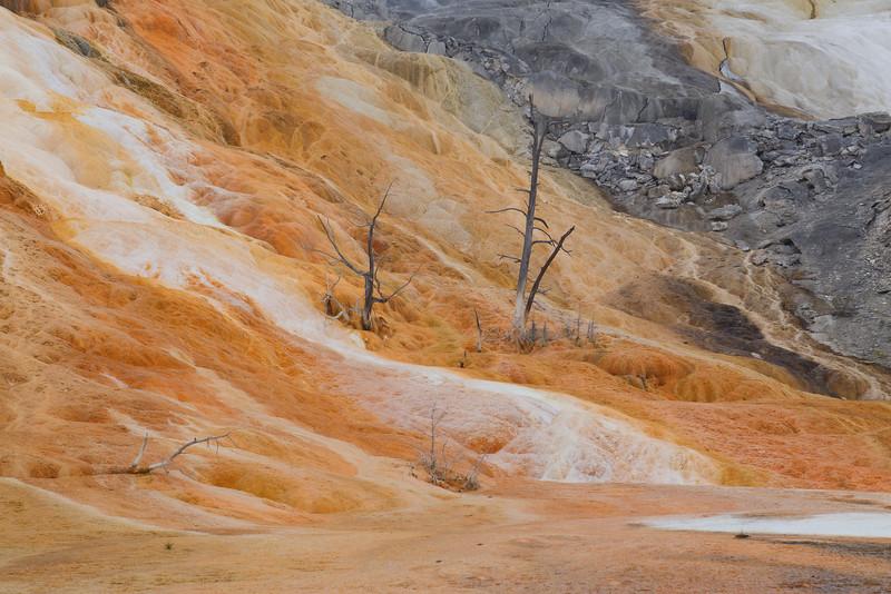 Yellowstone 113.JPG