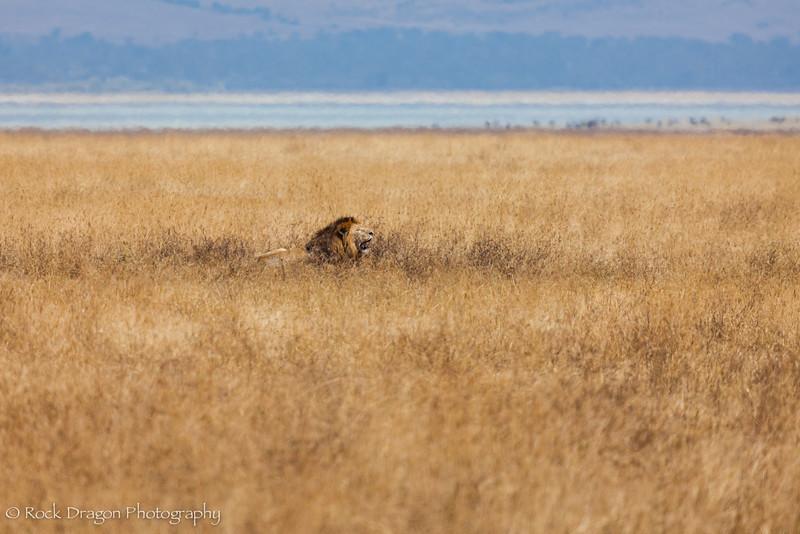 Ngorongoro-72.jpg