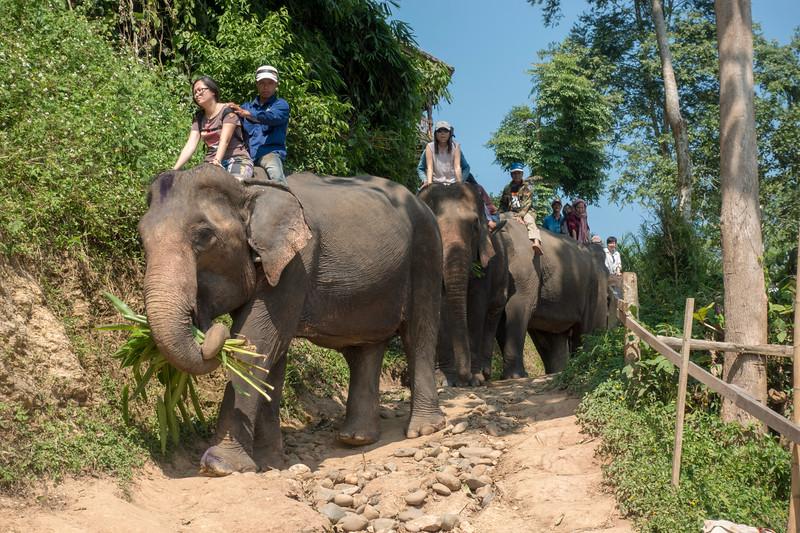 Indochina 2017-00992.jpg