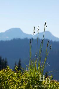 2013-07 Rainier