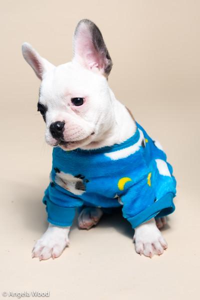Puppies53.jpg