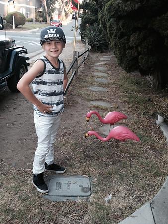 Jackson & Pink Flamingos