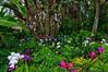 Orchids - Flower & Garden Festival 2012<br /> Flower & Garden Festival 2012