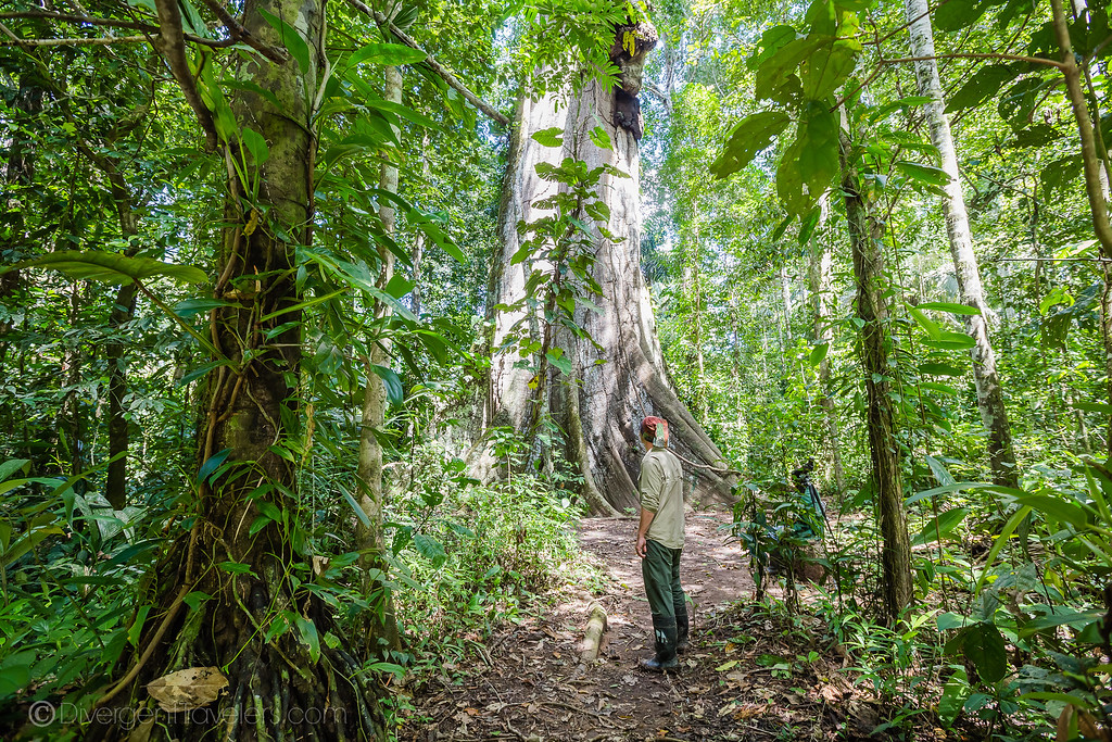 Posada Amazonas - Tambopata Peru - Lina Stock