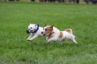 IGC-2018-Terrier Races