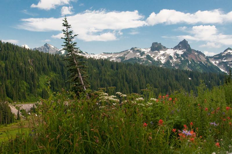 Mt Rainier National Park, Wa