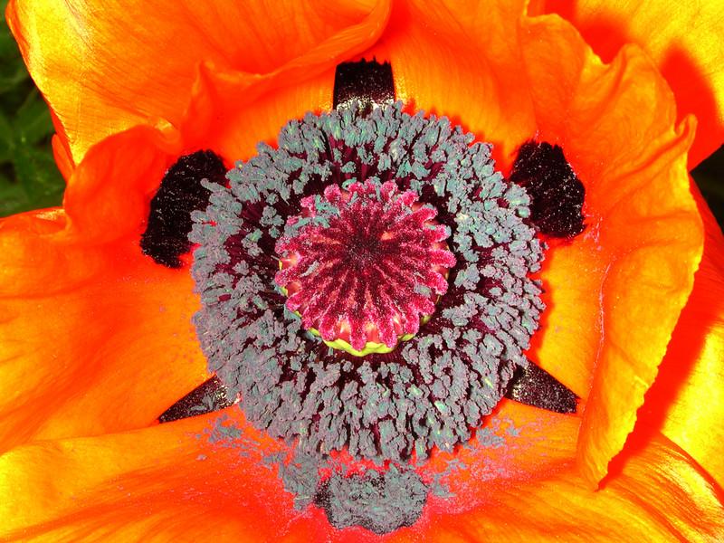 poppy 67  www.tabblo.com/studio/stories/view/254795/