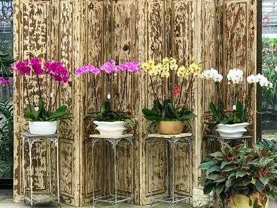 Homestead FL Orchid Growers - Feb 2, 2012