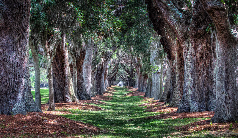Avenue of the Oaks, St Simon, Ga.