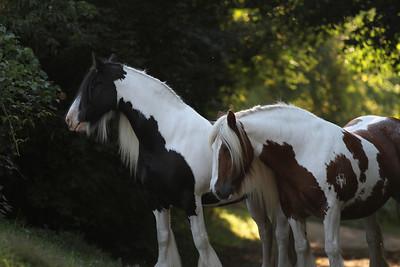 Gypsys Pony Trail