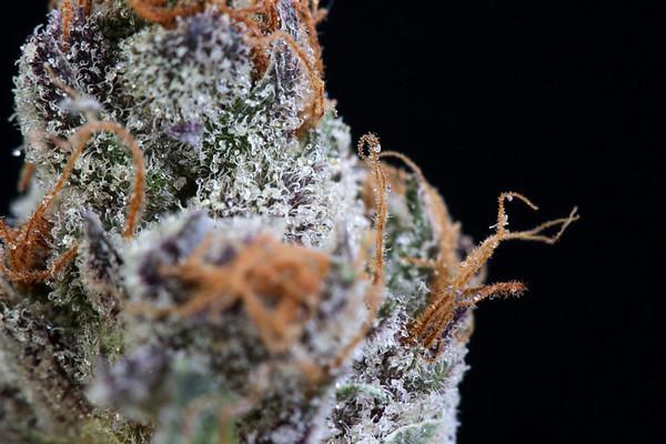 Kings Cannabis Strawberry Shortcake 06-16-20