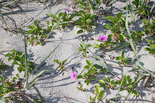 Cocoa beach At Osceola and Ocean Beach Blvd