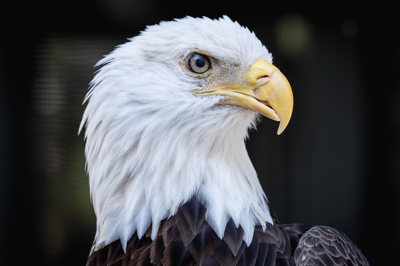 Proud to be an Eagle_.jpg