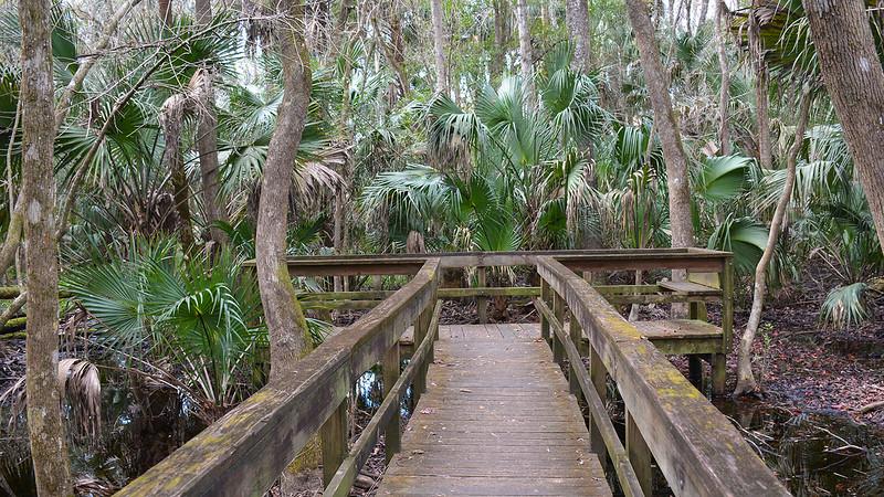 observation platform in swamp