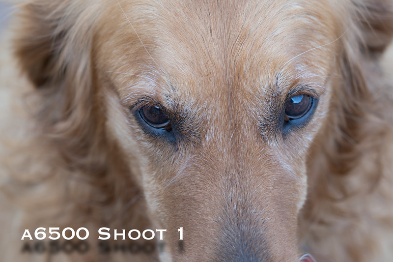 a6500 macro - Shoot 1-3.jpg