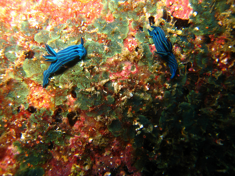 Diving in the Galapagos (133 of 392)