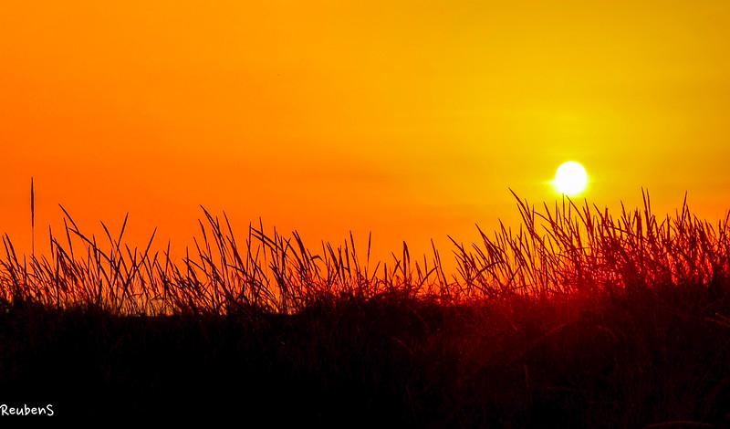 Grass at sunset, Porto.jpg