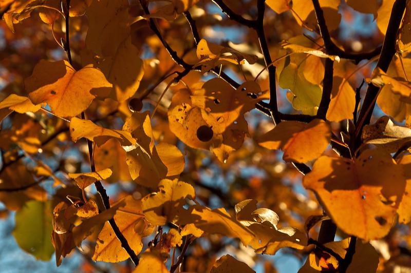 fall03.jpg
