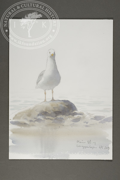 "Adult glaucous gull at the Longyear River mouth | 6.5.2019 | ""I want to convey what I see with immediacy and simplicity to make the viewer feel present on the Arctic scene."" 