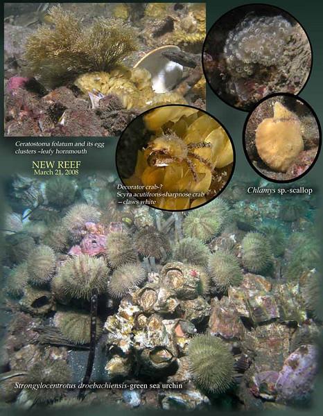 4 3.21.08 new reef 3.jpg