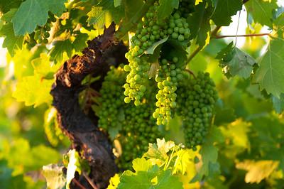 20130616_Vineyards