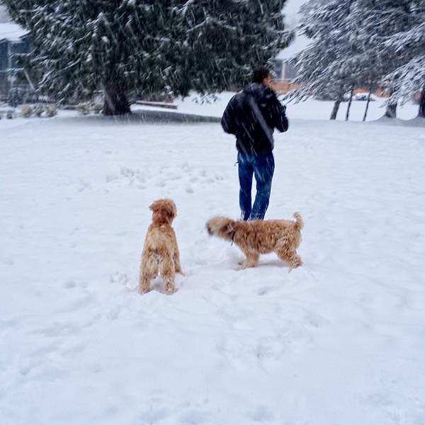 snowBuddies-3.jpg