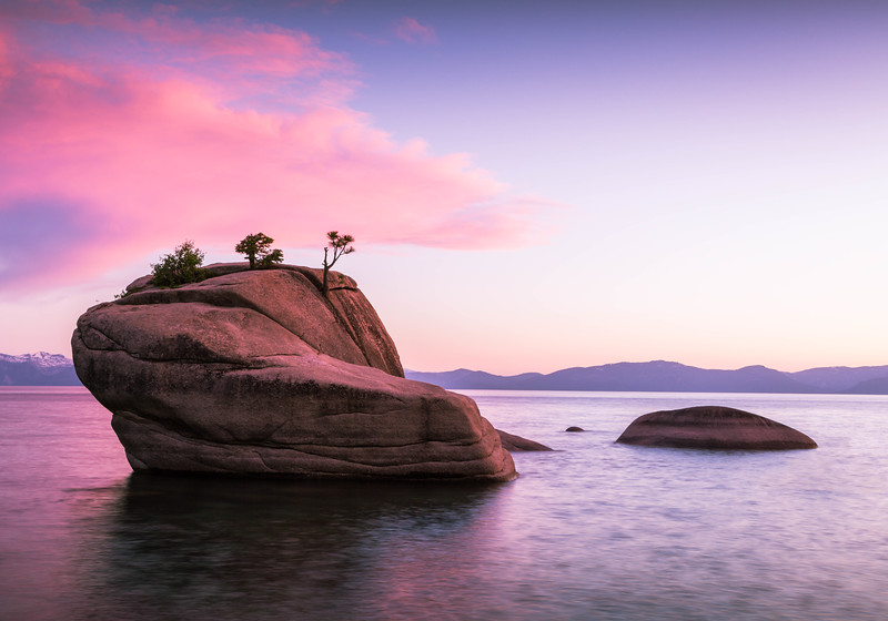 Bonsai Rock in Red